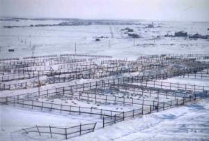 Ферма для телюней